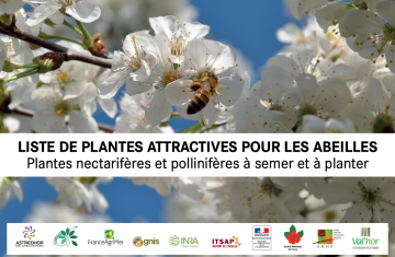 3 - Liste plantes attractives